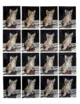 Sixteen Kitties