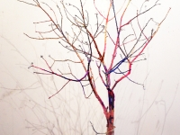 Bunlet Tree